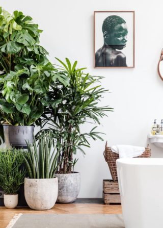 stylist lily house plant. LIVING ROOM  BIGGER the better when it comes to indoor plants or even trees for this area Using large will add height and a different Styling with Plants in Your Home Higheight Living