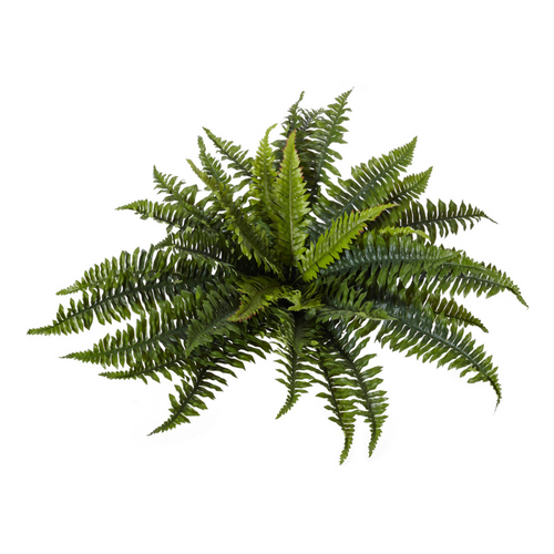 Styling With Plants In Your Home Higheight Home Amp Living